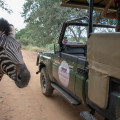 Safaris with Zebra